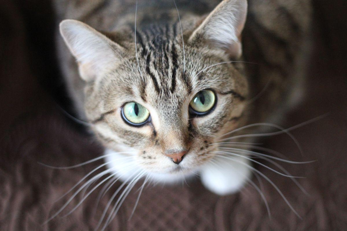 Qué costos debes tener en cuenta a la hora de adoptar una mascota