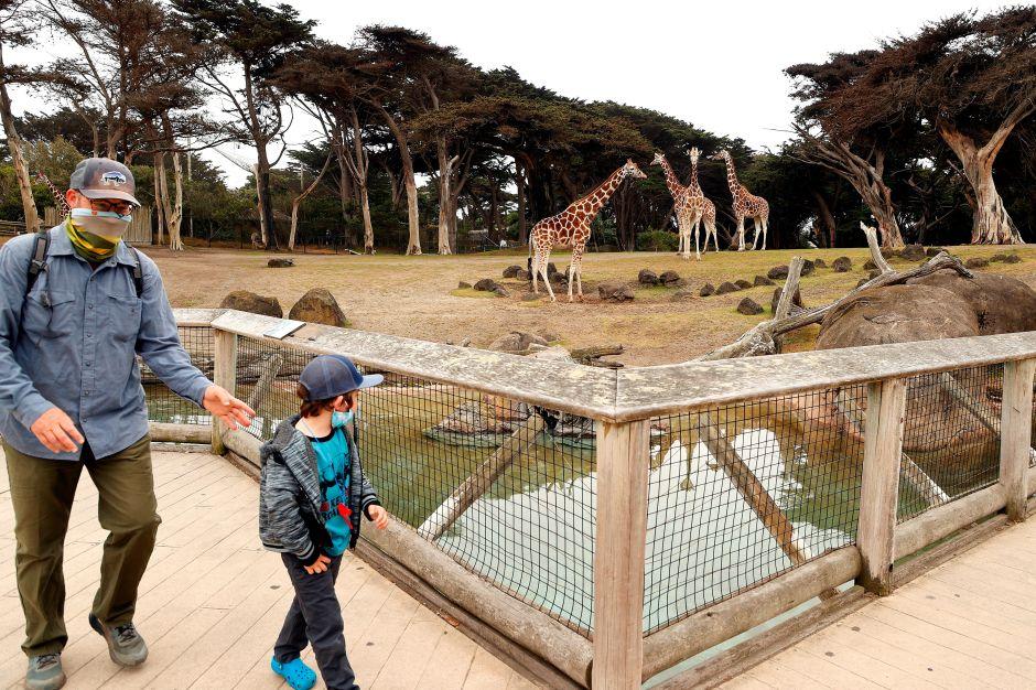 El zoológico de San Francisco reabrió sus puertas de manera limitada