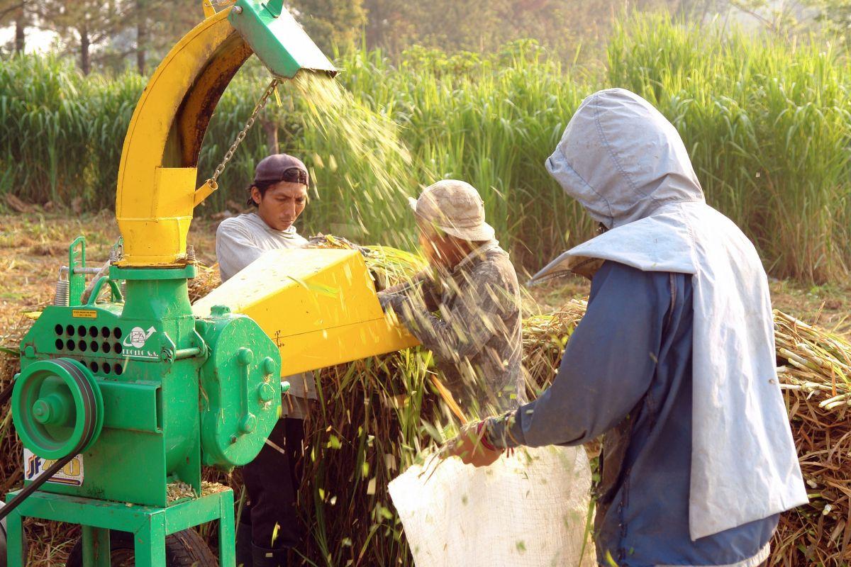 Laproducción de alimentoscomo agricultura, ganadería, silvicultura y pesca tienen un riesgo menor de sufrir recortes.