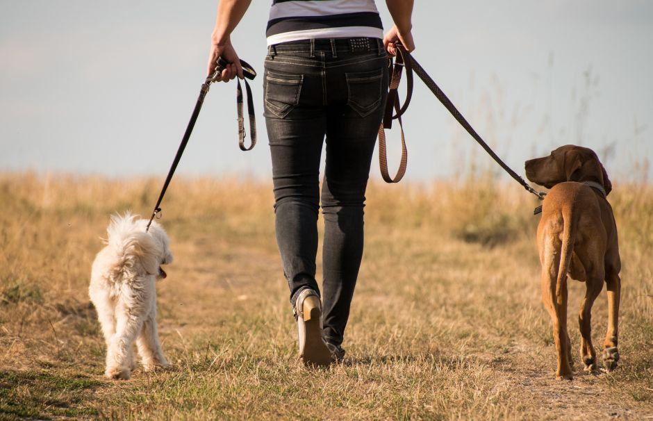 Cuánto cobra un cuidador de mascotas y qué requisitos hacen falta