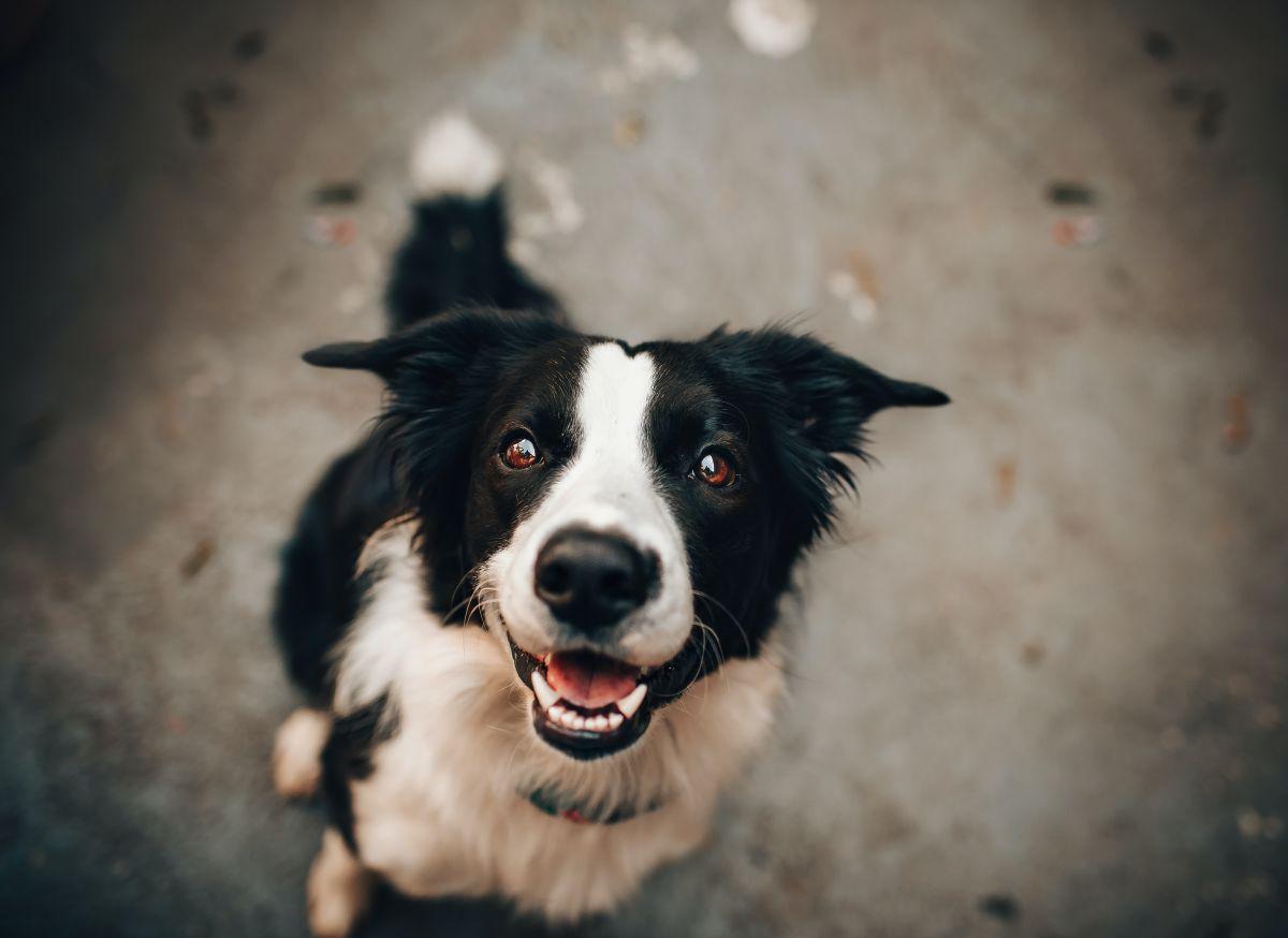 Las mejores opciones de alimento para perro de calidad que favorecen a tu economía