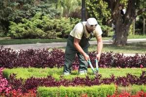 Cómo convertirte en jardinero certificado y cuánto puedes ganar