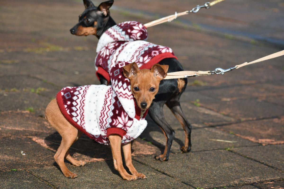 5 pasos para empezar un negocio como cuidador de mascotas