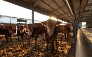 Dónde en Estados Unidos mejor pagan al personal de criaderos de animales para consumo