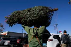 Por qué los árboles de Navidad naturales son más caros en medio de la pandemia