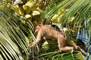 Target se suma a Costco y deja de vender leche de coco vinculada al maltrato animal